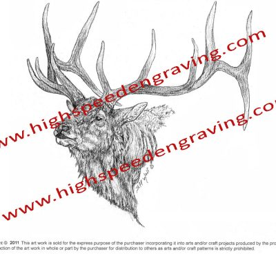 Bull Elk Drawing by Jeff Wolf